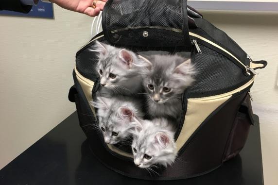 Hos veterinären 12 veckor gamla
