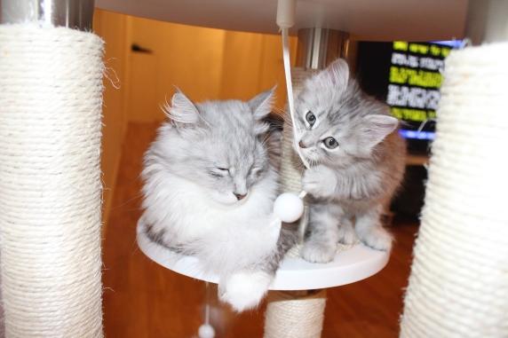 Mamma Sessan och Tiger 8 veckor