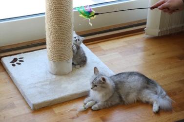 Mamma Maia och Simba 6 veckor